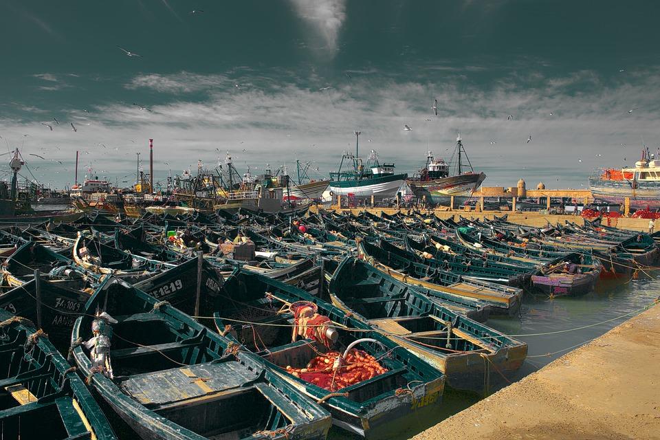 morocco-assaouira-fish1532022588