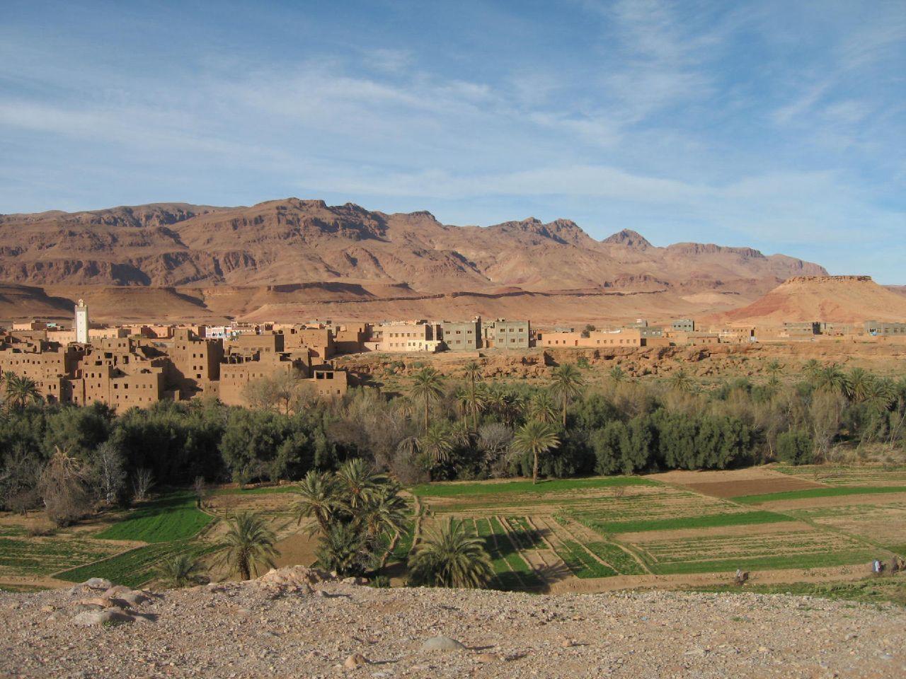 morocco-erfoud-palm1532022554
